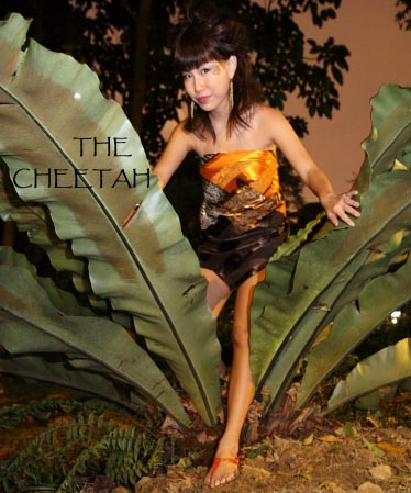 the-cheetah